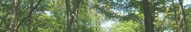 森林003