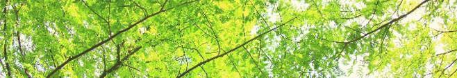 森林006