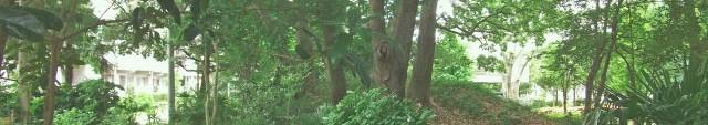 森林004