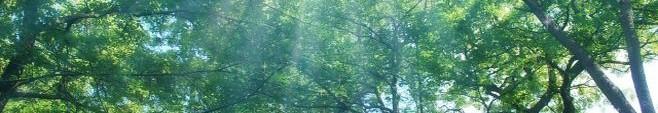 木漏れ日001