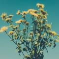 お墓参りと花