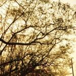 風景001