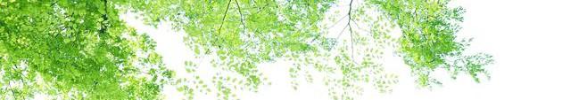 春-新緑015