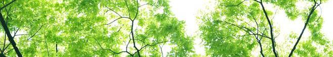 春-新緑001