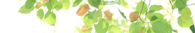 春-新緑013
